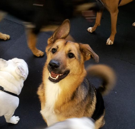 Picture credit: Fuzzy Buddys Doggy Day Care, the Best doggy day care in Shoreline.